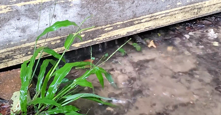 How To Stop Water Runoff In Yard